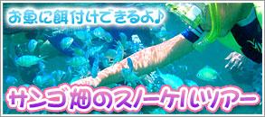 熱帯魚に餌付けできるよ♪