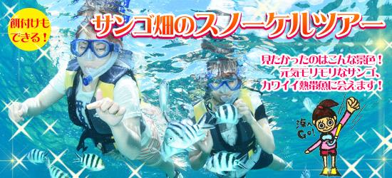 スノーケルツアー 熱帯魚と遊ぼう!餌付けができる